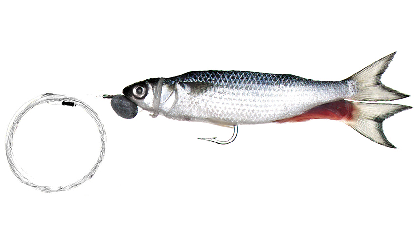 Trollers mono rigged silver mullet baitmasters of south for Mullet fish bait
